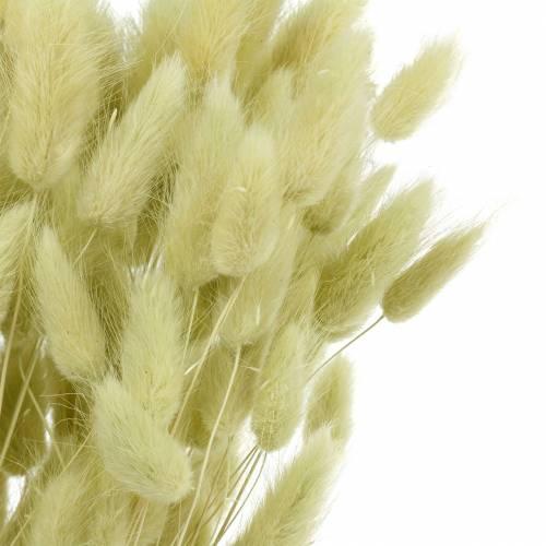 Samtgras Lagurus Hellgrün 100g Trockengräser