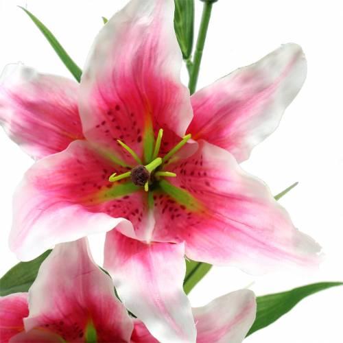 """Orientalische Lilie """"Stargazer"""" Weiß, Pink 86cm"""