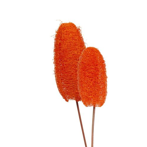 Luffa klein am Stiel Orange 25St