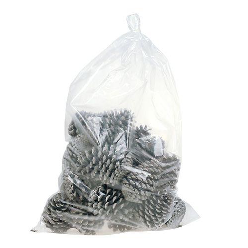 Maritima Zapfen 10cm - 14cm weißgewaschen 25St