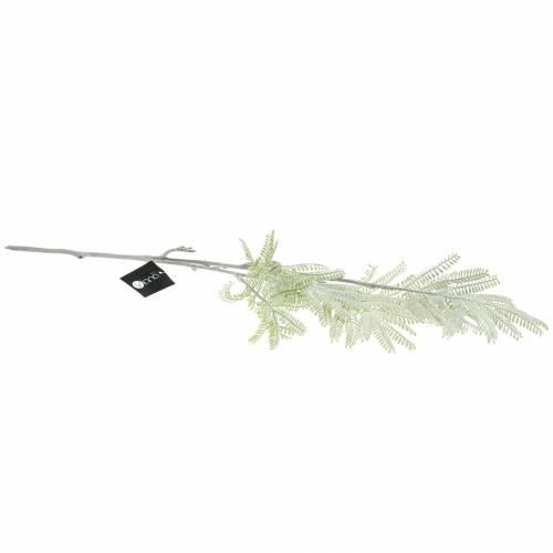 Dekozweig Mimose Grün Frosteffekt 63cm