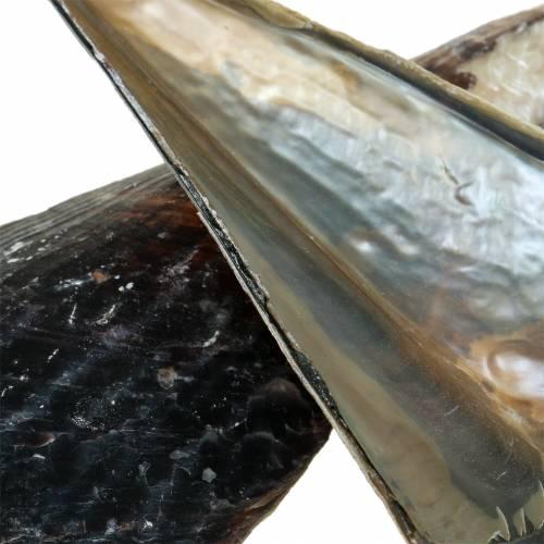 Steckmuscheln Schwarz 24 – 30cm 1kg