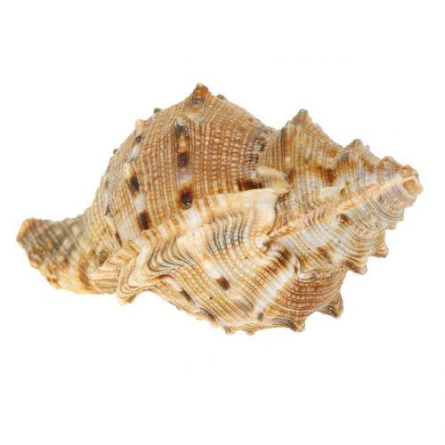 Muschel Sortiment Natur 500g