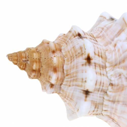 Muschelmix Natur Sortiert 5St