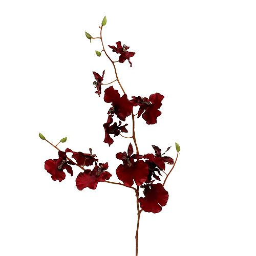 Orchidee Oncidium 70cm Dunkelrot 3St