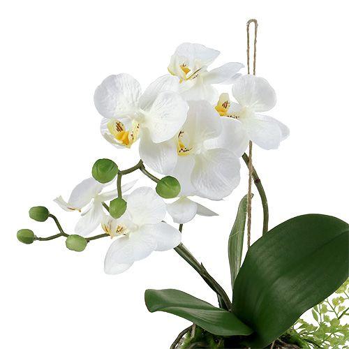 Orchidee Phalaenopsis zum Hängen H33cm Creme