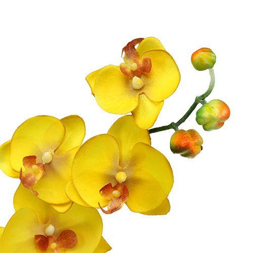 orchidee mit 2 sten 60cm gelb preiswert online kaufen. Black Bedroom Furniture Sets. Home Design Ideas