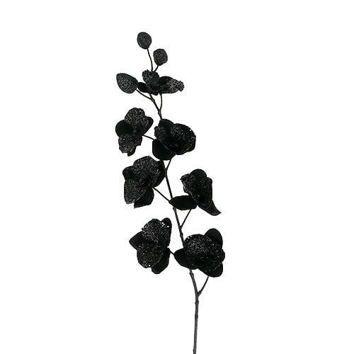 Orchidee schwarz