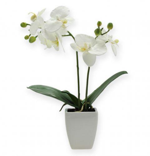 Deko Orchidee Phalaenopsis Mit Ubertopf 32cm Preiswert Online Kaufen