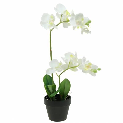 Orchideen weiß imTopf H35cm