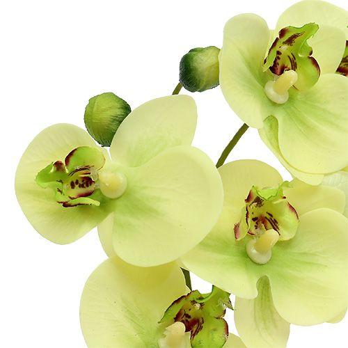 orchideen im topf gr n h30cm preiswert online kaufen. Black Bedroom Furniture Sets. Home Design Ideas