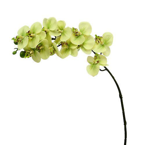 Orchideenzweig Hellgrün L58cm