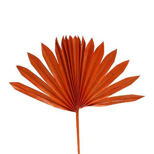 Palmspear Sun mini Orange 50St