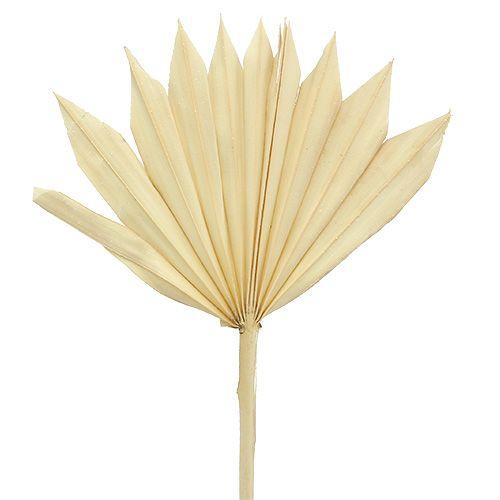 Palmspear Sun mini gebleicht 30St