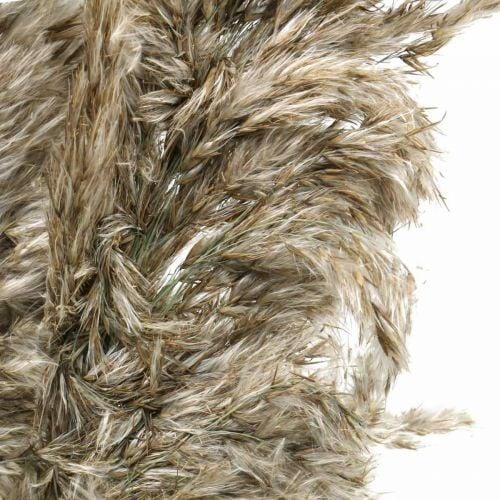 Getrocknetes Pampasgras Natur Für Trockenstrauß 70-75cm 6St