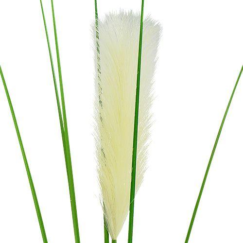 pampasgras wedel creme gr n h100cm preiswert online kaufen. Black Bedroom Furniture Sets. Home Design Ideas
