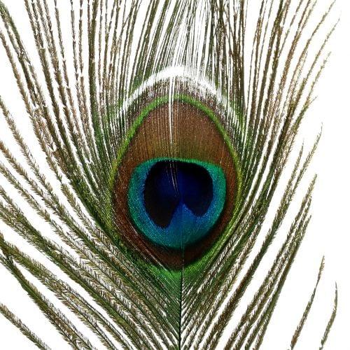 Pfauenfedern 22cm - 30,5cm 12St