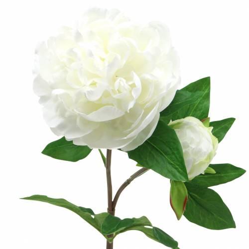 Pfingstrose Weiß 72cm