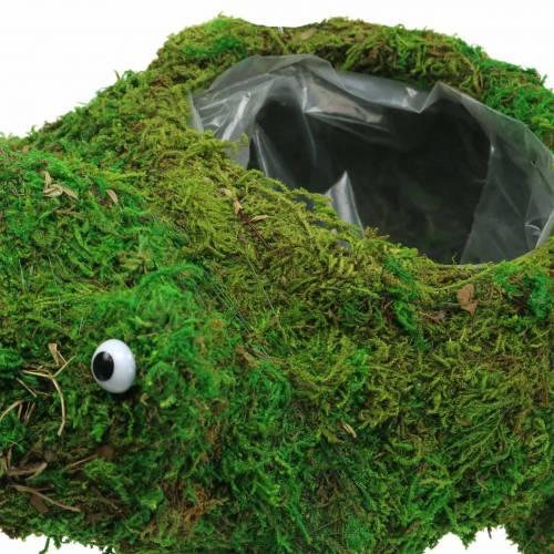 Pflanzgefäß Frosch mit Moos Grün 35×25cm H21cm