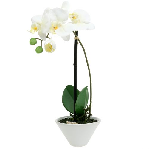 Phalaenopsis Weiß in Schale Blumendeko H38cm