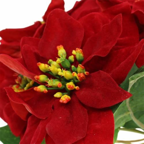Weihnachtsstern Strauß Rot Samt 35cm