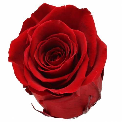 Infinity Rosen Groß Ø5,5-6cm Rot 6St