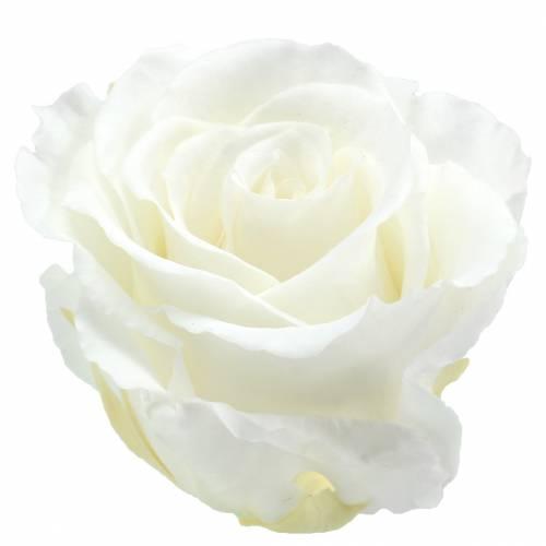 Infinity Rosen Groß Ø5,5-6cm Weiß 6St