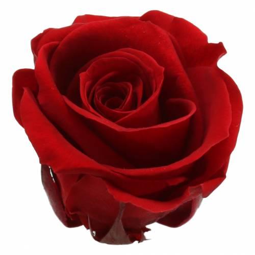 Konservierte Rosen Medium Ø4-4,5cm Rot 8St