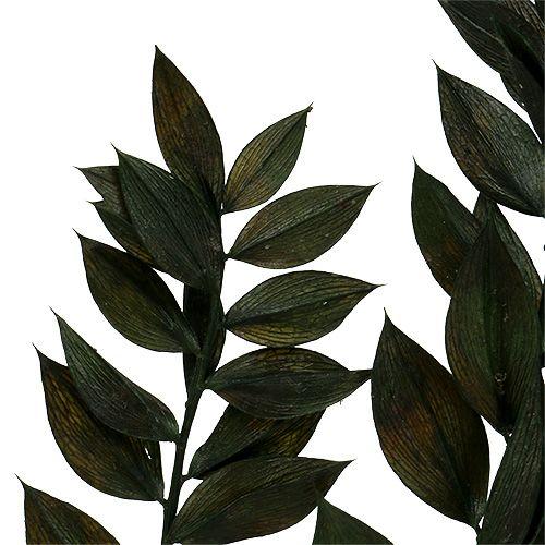 Ruscus Zweige Grün 75cm - 95cm 1kg