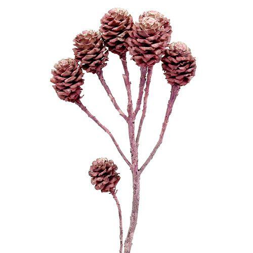 Salignum brombeer gefrostet 25St