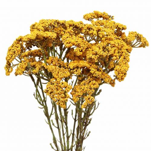 Schafgarbe künstlich Gelb 74cm 3St