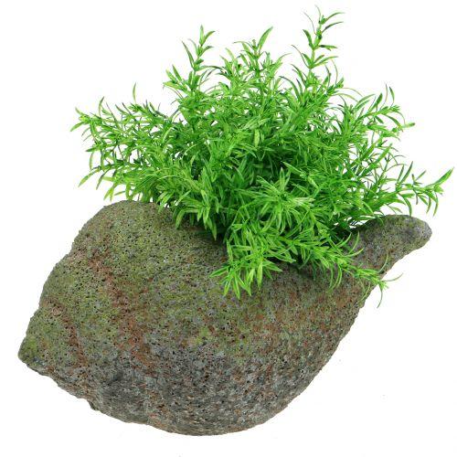 Muschel zum Bepflanzen mit Moos 25 cm