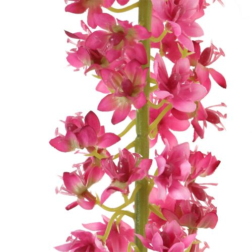 Steppenkerze Wüstenschweif Pink 106cm