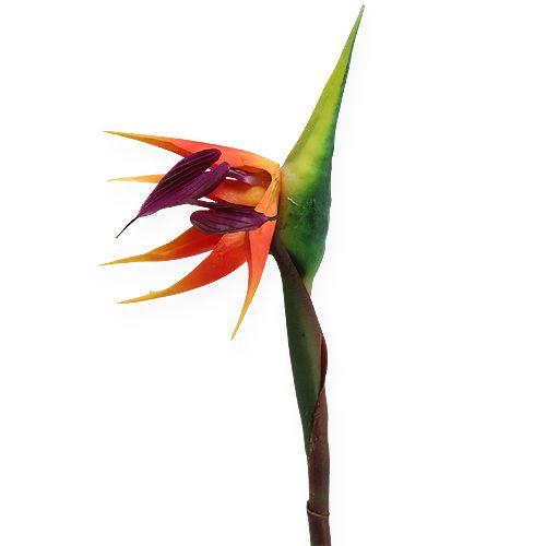 strelitzie paradiesvogelblume 62cm preiswert online kaufen. Black Bedroom Furniture Sets. Home Design Ideas