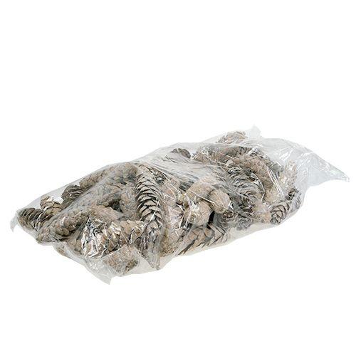 Strobus Zapfen 15cm - 20cm weißgewaschen 50St