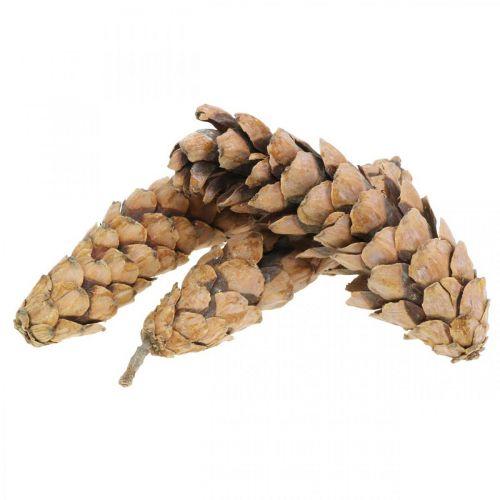 Kiefernzapfen Weymouthskiefer Strobus  Natur Gemischt 2,5kg