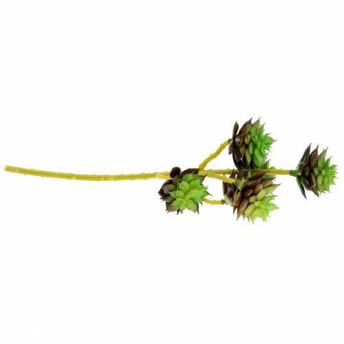 Sukkulentenpick Grün/Braun 35,5cm
