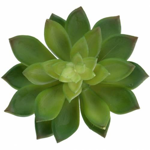 Sukkulente Hauswurz Grün 14cm