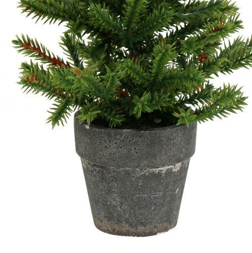 Tannenbaum im Topf Grün 23cm