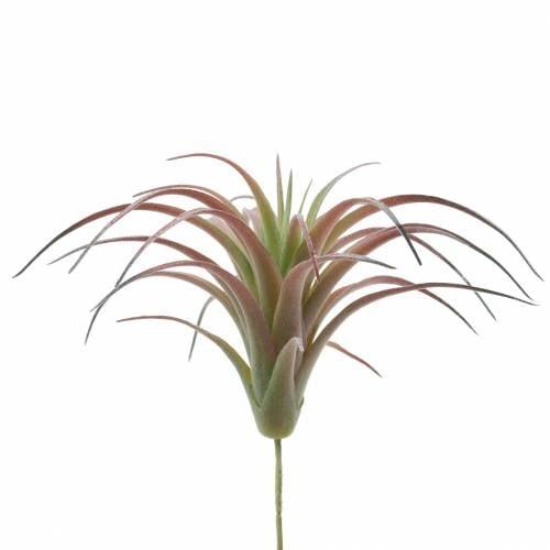 Tillandsie Grün-Rot beflockt 15cm 4St
