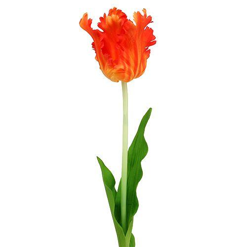 Tulpe Orange 70cm Preiswert Online Kaufen