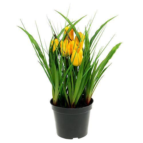 tulpen im topf gelb 30cm preiswert online kaufen. Black Bedroom Furniture Sets. Home Design Ideas