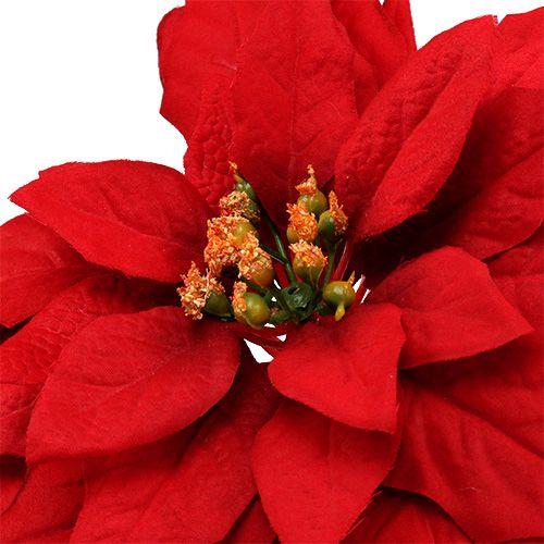 Weihnachtsstern Rot 57cm 1St