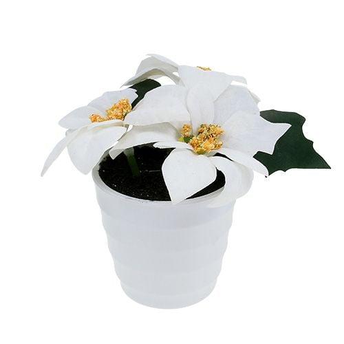 Weihnachtsstern im Topf Weiß künstlich H11cm