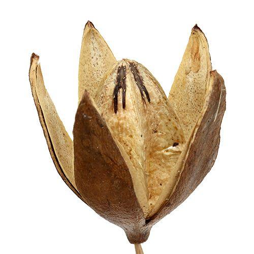 Wildlilie am Stiel Naturfarben Ø6,5cm L55cm 45St