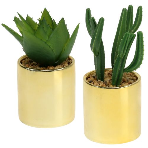 Kakteen Grün im goldenen Topf 12cm - 17cm 4St