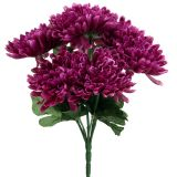 Chrysantheme Aubergine mit 7 Blüten