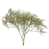 Strandflieder, Statice Tatarica, Meerlavendel, Limonium,  Trockenblumen 1 kg natur