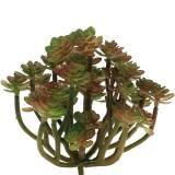 Sukkulente künstlich Grün 14cm