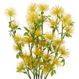 Xanthium Seidenblume Gelb 53cm 6St
